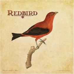 Redbird -