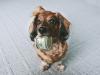 Pet trust beyer