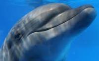 1aa1asmiling dolphin