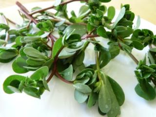 Pure+Naturalis+Green+Smoothie+Purslane1-1024x768