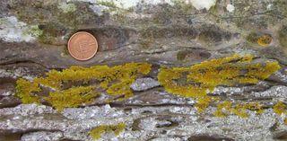 Lichencropped2