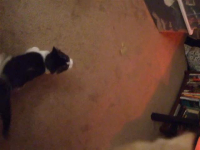 Cat Dancin'