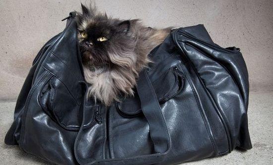 Gato viajante 2