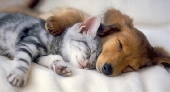 Famili-a de perro y gato