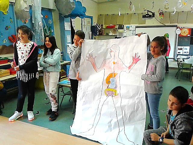 Escuelas hermanadas-exposición trabajo cooperativo: el cuerpo humano | CEIP 'La Rioja'