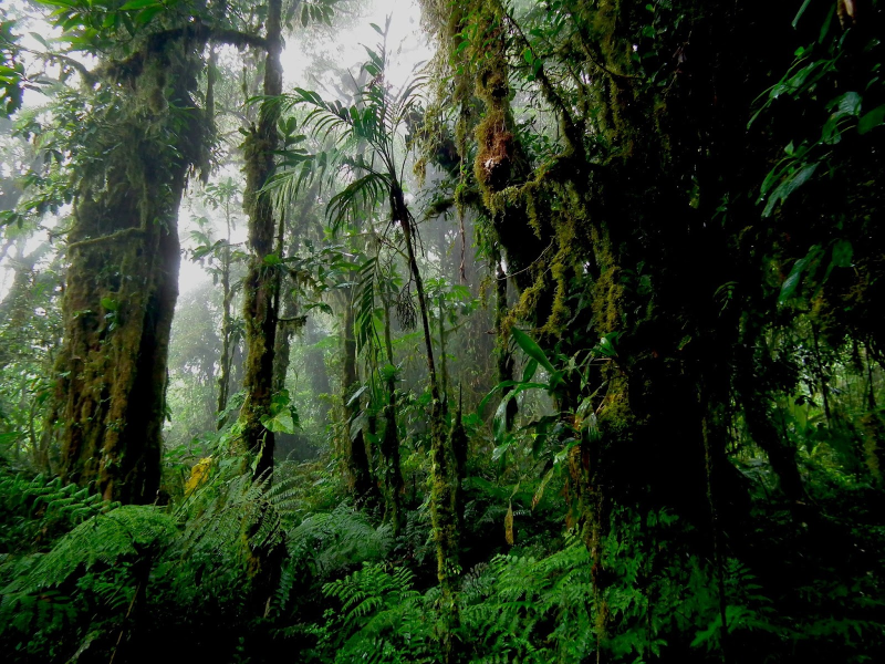 Cloud forest interior