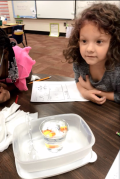 Overall layout of materials for candy corn experiment
