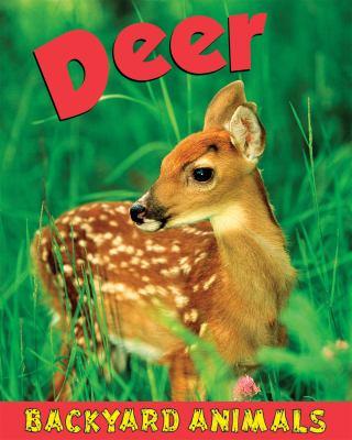 Deer Backyard Animals