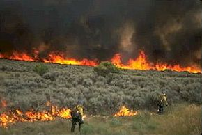 BLM Wildland Firefighters