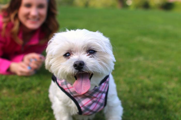cute-white-maltese-dog-nordstrom-bp
