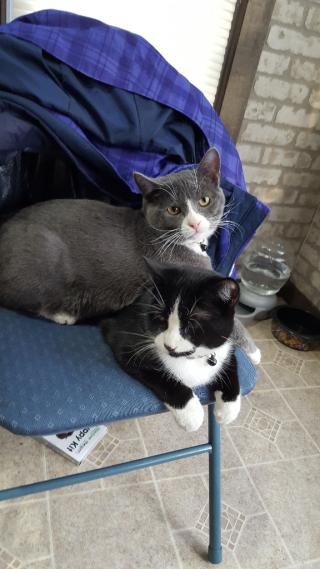 My cats Bud & Weiser