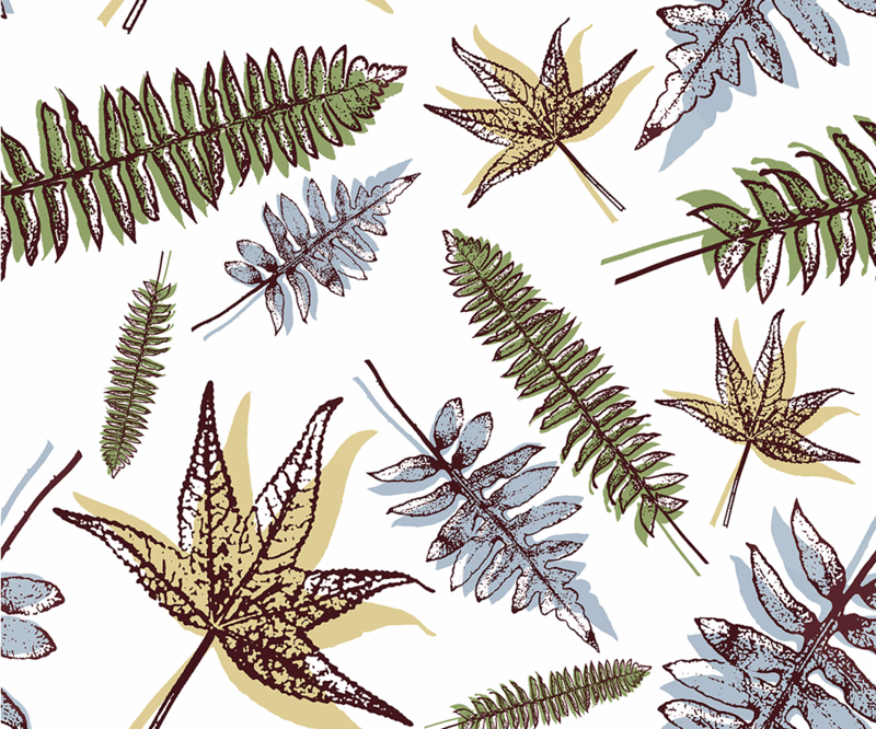 Scattered Ferns by Liz